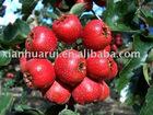 Hawthorn / Fructus Crataegi
