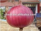 new crop onion(2012 lowest price)
