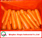 "JQ ""Shandong Fresh Carrot"" Fresh Carrot High Quality&Low Price--Hot Sale"