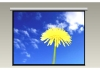 Motorized Projection Screen with White Steel Casing