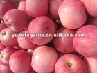2012 new crop high quality fresh fuji apple