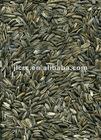 Sunflower Seeds 3146