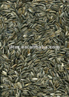 Sunflower Seeds 3146