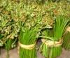 Boiled fern