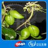 Lyphar Supply High Quality 5-Hydroxytryptophan (5-HTP)