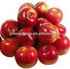 apple hot sale