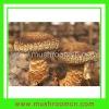 Flat shiitake mushroom growing bag