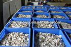Poria hoelen herbs organic herbs organic chinese herbs mushroom Improve immunity