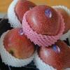 China fruit qinguan apple