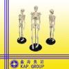 17.5inch /42cm mini human skeleton model