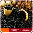 Free Samples Export chinese bean black kidney beans High Quality black matpe beans(in bulk)