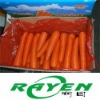 Chinese Fresh Carrot