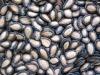 pure black pumkin seeds
