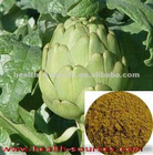 Best quality Artichoke Extract for lose weight