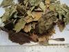 Organic Ginkgo Leaves