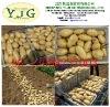 China Shandong Holland potato Korea market