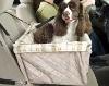 Dog car carrier/dog booster seat
