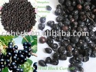 wild black currant fruit, whole or powder