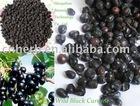 wild black currant fruit, whole or powder