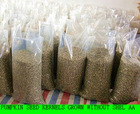 2011 new type pumpkin seed kernels grown without shel A