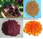 Water soluble Natural Grape Seed Extract 95% proanthocyanidins
