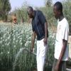 farm solar water pump