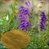 Factory supply! Scutellaria Baicalensis Extract /baicalein 98% HPLC