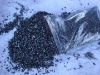 coking coal 93% F.C Higher quality and Lower price