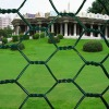 High quality Hexagonal wire mesh(20 years' factory)