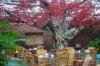 maple leaf artifcial tree