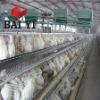 Galvanized Steel Wire Chicken Cage for Farm