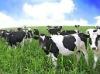feed grade tri calcium phosphate