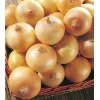 yellow red onion with good price