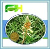 Organic Aloe Vera Powder 200:1 100:1 10:1/aloe vera gel freeze dried powder/aloe vera gel spray dried powder