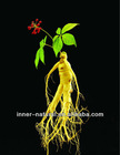 Low Pesticides residues-Panax Ginseng Root P.E.(5%-30% Ginsenosides HPLC)