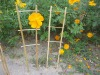 Natural Bamboo Cane Trellis for flower support or vegetables