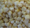 New crop IQF frozen corn