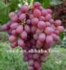 red grape