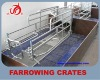 Galvanized pipe Eurostyle limit sty pig farrowing crates