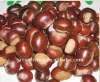 2011 crop fresh chestnut(from chinese)
