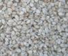Ethiopia Humera whitish sesame seeds