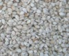 Ethiopia Humera whitish sesame seeds