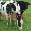 high quality grassland fence(manufacture)
