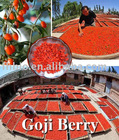 2012 new crop goji berry