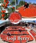 2012 new crop goji berry