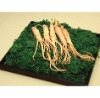 Ginseng Extract Powder for cosmetics