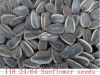 American Sunflower Seeds 118 24/64 2012 New Crop