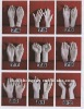 Painted lifelike white display hands mannequins for sale
