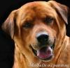 high definition canvas dog prints