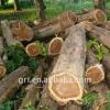 Hight Quality Teak Logs